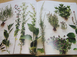 Herb_01