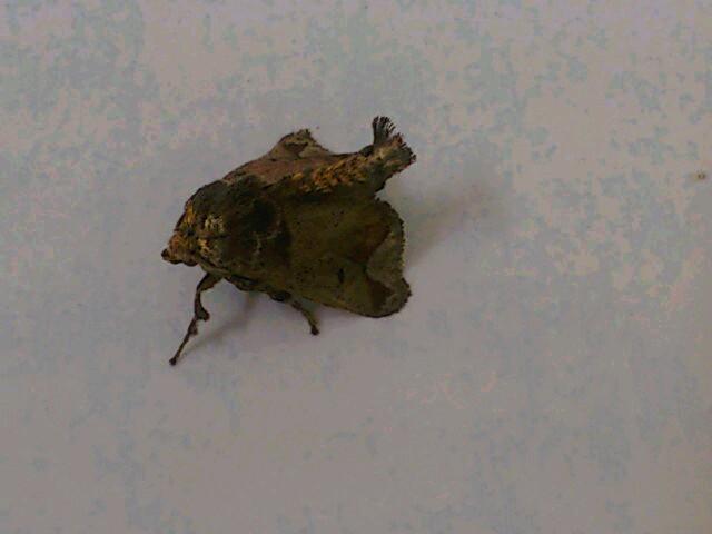 葉っぱか、虫か?