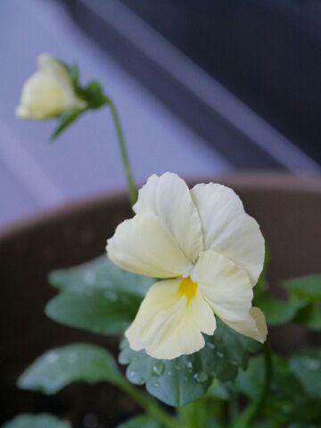 初めての花……かな。