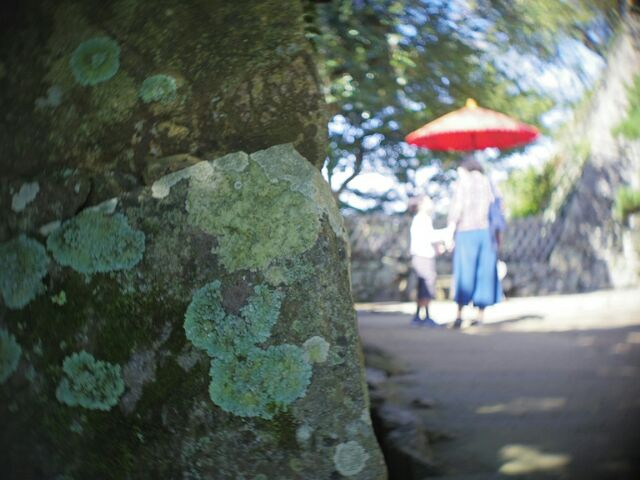彦根城の石垣と嫁と子と